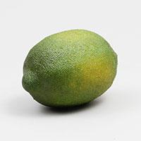 לימון לתצוגה (ליחידה)