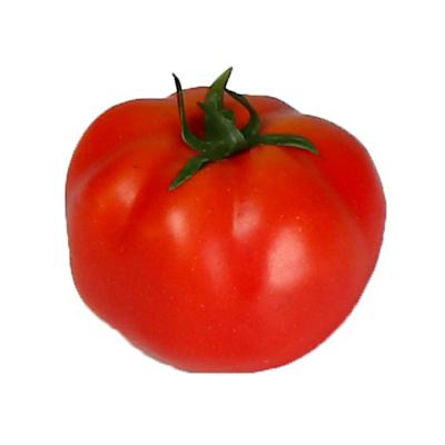 עגבניה לתצוגה (ליחידה)